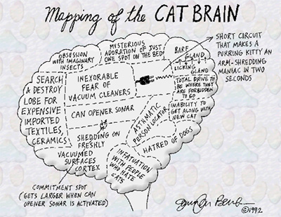 Cat_brain_map